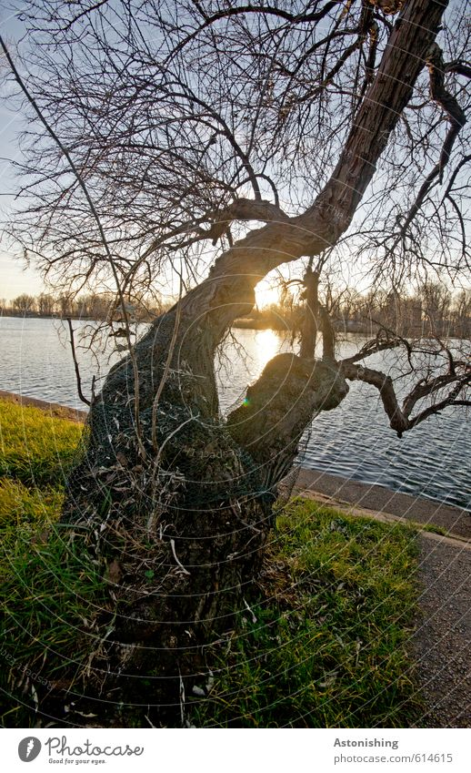 doppelter Baum Umwelt Natur Landschaft Pflanze Wasser Himmel Wolkenloser Himmel Sonne Sonnenaufgang Sonnenuntergang Sonnenlicht Wetter Schönes Wetter Gras Park