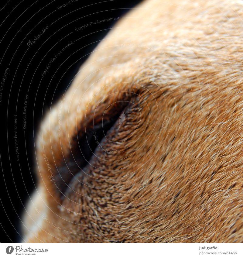 Hundemüde schwarz Auge Haare & Frisuren Hund braun schlafen weich Fell Müdigkeit Haustier Treue