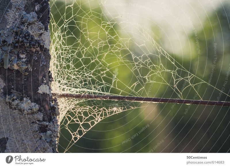 Altes Spinnennetz am Waldrand alt Umwelt Armut kaputt Spinnennetz Spinne Trägheit