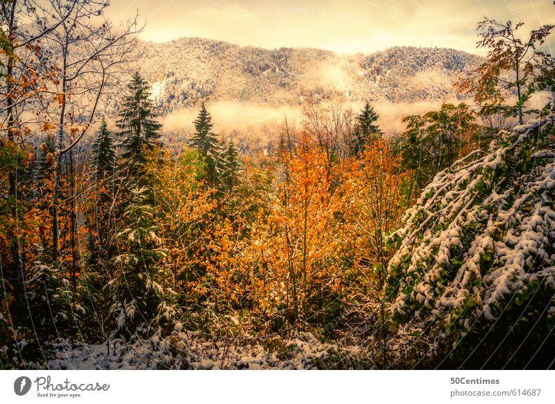 Herbstlandschaft im ersten Schnee Ferien & Urlaub & Reisen Tourismus Ausflug Winter Berge u. Gebirge Umwelt Natur Landschaft Klima Klimawandel Wetter Wald
