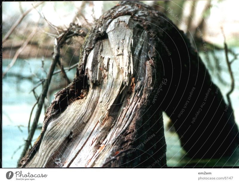 kapbaum Baum See kaputt Baumrinde Natur