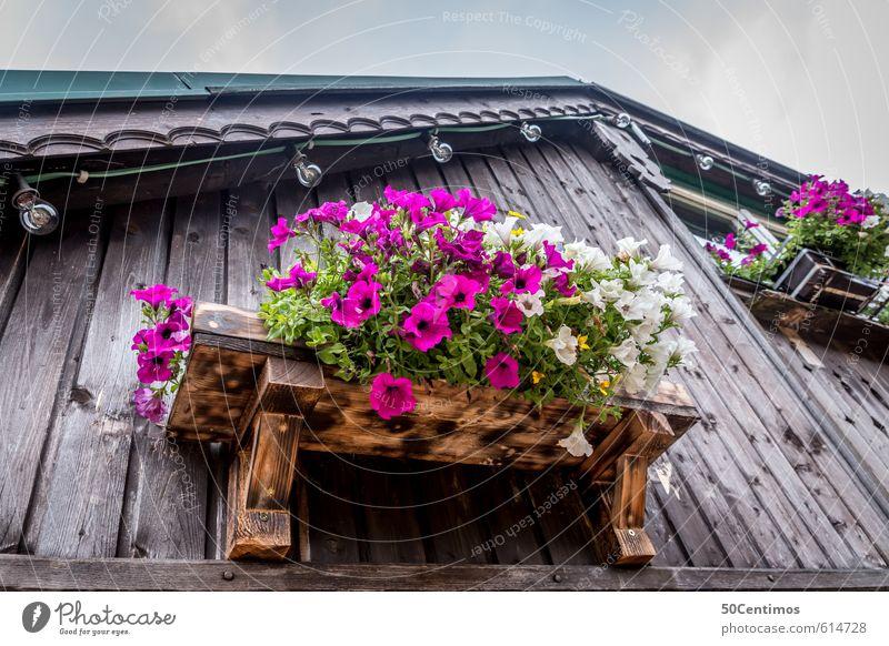Blumen am Fensterbrett Ferien & Urlaub & Reisen Pflanze Sommer Sonne ruhig Haus Ferne Berge u. Gebirge Freiheit elegant Lifestyle Tourismus wandern Ausflug
