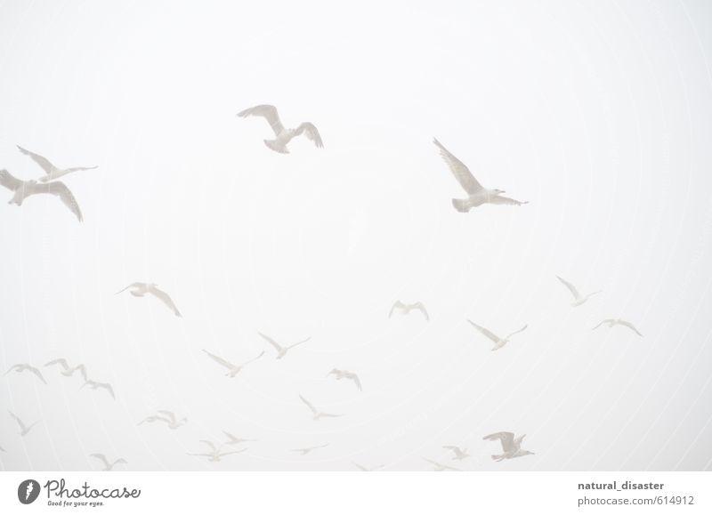 weiß in weiß - Möwen am Himmel Himmel Natur Ferien & Urlaub & Reisen weiß Sommer Meer Erholung ruhig Freude Ferne Strand Umwelt Küste Freiheit Luft Vogel