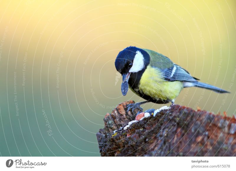 Natur schön grün Farbe Landschaft Tier Winter Wald gelb klein Essen natürlich Garten Lebensmittel Vogel Park