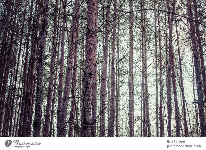 Holzwirtschaft Umwelt Natur Pflanze Himmel Sonne Frühling Sommer Herbst Winter Klima Baum Wald Linie braun viele Nutzholz Baumstamm Kiefer gerade fällen