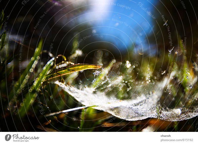 Spinnenrevier Umwelt Natur Landschaft Pflanze Urelemente Erde Wasser Wassertropfen Himmel Sonnenlicht Herbst Schönes Wetter Gras Wiese Netzwerk blau braun grün