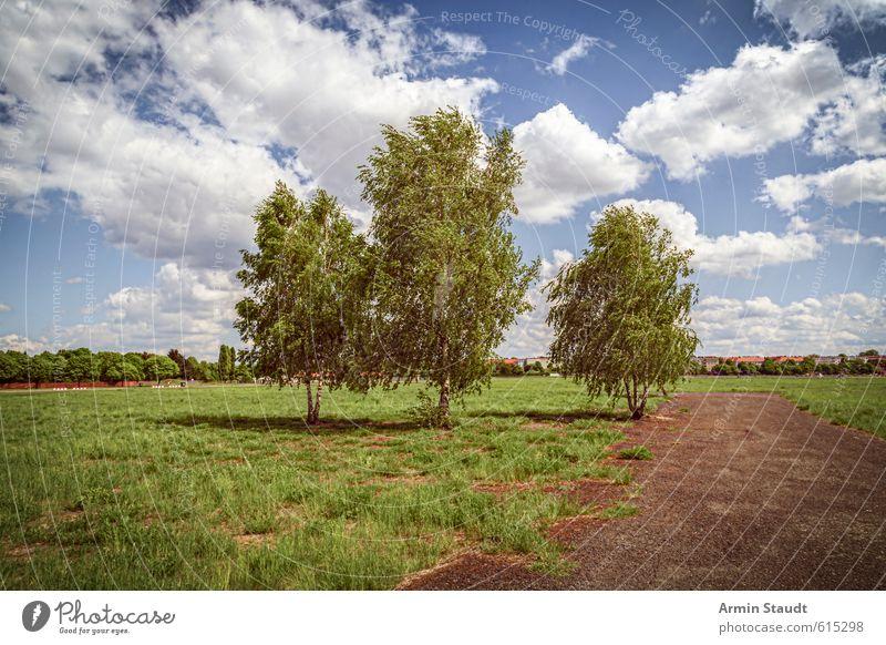 Drei Birken auf dem Tempelhofer Feld, Berlin Sommer Natur Landschaft Himmel Wolken Schönes Wetter Wind Baum Park Wiese Stadt Menschenleer Sehenswürdigkeit