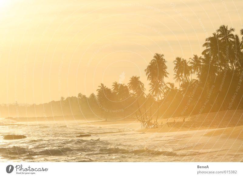 Strand Ferien & Urlaub & Reisen Wasser Sommer Sonne Baum Meer Einsamkeit Strand Ferne gelb Küste Freiheit Schwimmen & Baden Sand Wellen gold