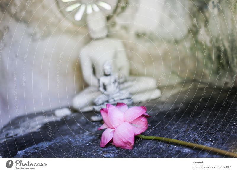 Blume Kunstwerk Skulptur Kultur Orchidee Blüte exotisch Kirche Tempel Ferne violett rosa rot Opferbereitschaft Glaube Religion & Glaube Zufriedenheit Glück