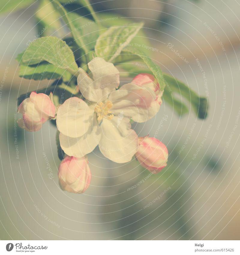 !Trash! | Filter-Experiment... Umwelt Natur Pflanze Frühling Schönes Wetter Baum Blatt Blüte Nutzpflanze Apfelblüte Blütenknospen Garten Blühend Wachstum