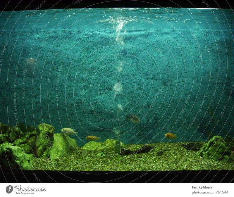 Blubb Blubb Aquarium Zoo Einsamkeit Fisch Blubbern wallpaper Wasser Schwimmen & Baden