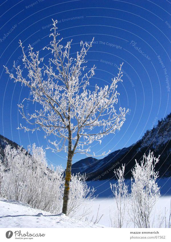 Weiss-Blaue Geschichten Winter See Bundesland Tirol Baum Schnee Eis Frost Berge u. Gebirge Kristallstrukturen Himmel weis blau
