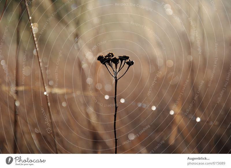 ...mit dem ersten Tageslicht... Natur schön Pflanze Einsamkeit Leben Gras außergewöhnlich elegant Zufriedenheit Sträucher authentisch Schönes Wetter Beginn