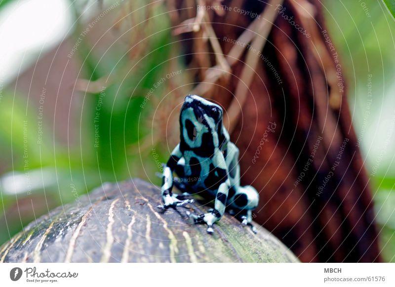 Hochnäsig schwarz rot grün nah Tier Unschärfe Zehen Frosch blau Beine Punkt Makroaufnahme Fuß