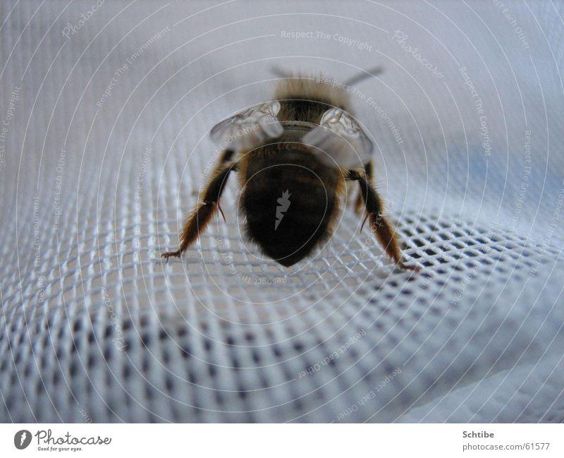 Ich mag dich nicht... Tier Hinterteil Insekt Biene