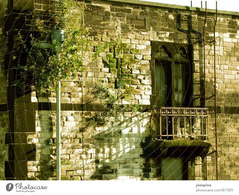 Regenrohr mit Gesicht Fenster Balkon historisch Idylle einrichten Haus Schatten Natur feucht grün aufmachen schließen geschlossen urinieren baufällig Gebäude