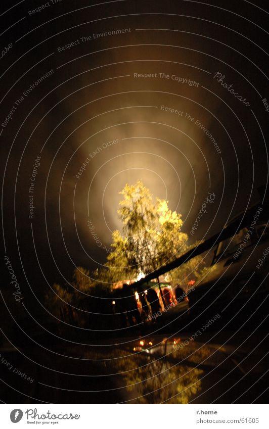 Lichtbaum Natur Baum