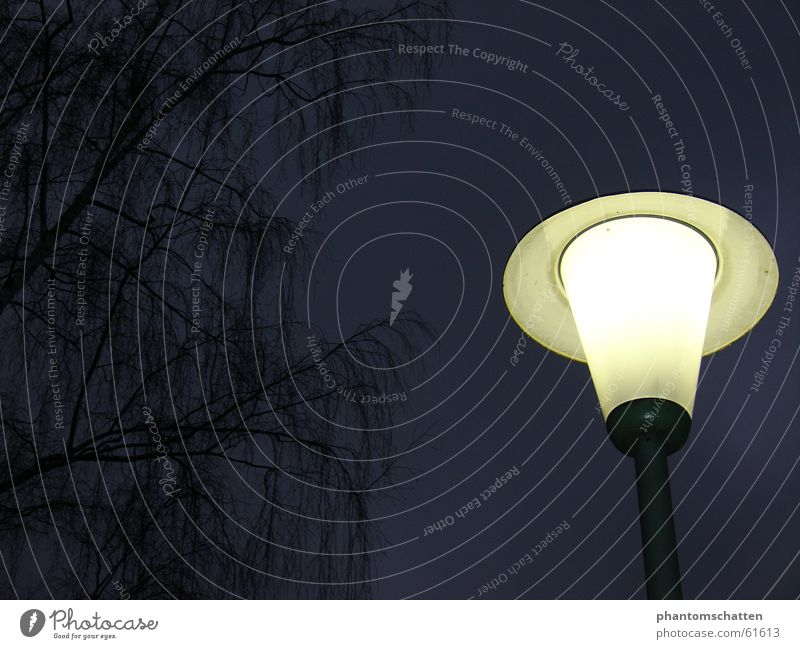 Laternenschein Nacht Lampe Abend Zweig