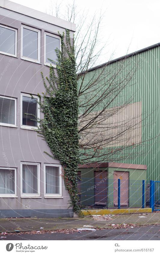 irgendwo zwischen Herbst Winter Baum Efeu Haus Industrieanlage Gebäude Architektur Mauer Wand Fassade Fenster Straße hässlich kalt trist Langeweile Fernweh