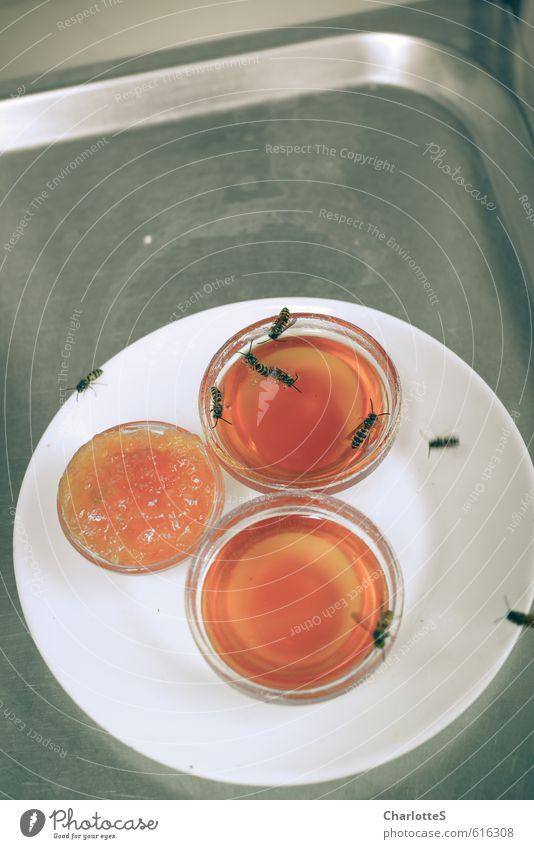 Bienenwabe grau Essen Metall fliegen orange Orange süß Insekt Süßwaren Frühstück Duft Geschirr Teller Fressen Mittagessen