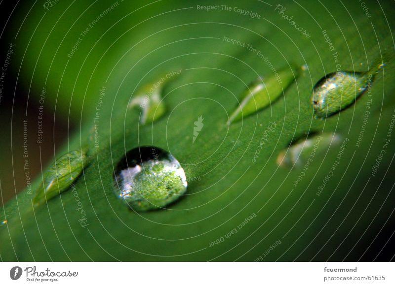 Mairegen Maiglöckchen Blatt Pflanze grün Wassertropfen frisch Frühling Erfrischung springen Regen gießen Garten Leben water waterdrops rain lily of the valley