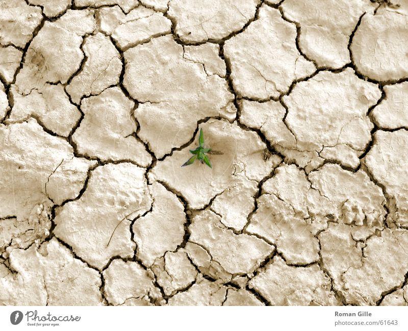 Last Survivor grün Pflanze Einsamkeit Graffiti hell klein Erde Bodenbelag Wüste trocken Riss beige Straßenkunst