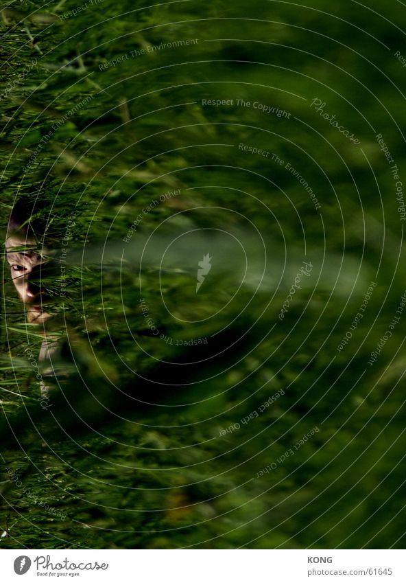 HIDING Gras grün Unschärfe Wiese böse verstecken hide Auge focus Brennpunkt Natur Blick Linse