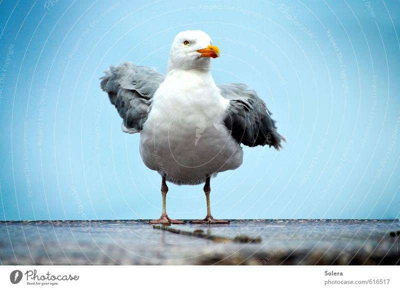 Möwe Tier Wildtier Vogel Tiergesicht Flügel 1 fliegen kuschlig blau Tierliebe Heimweh Fernweh Flugangst Abenteuer Ferien & Urlaub & Reisen Freiheit Gelassenheit