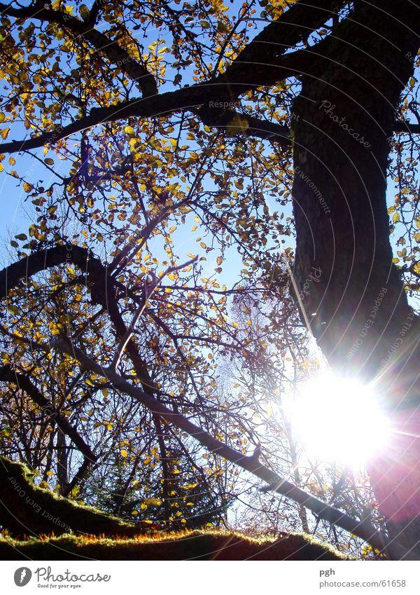 Herbsttag in Puppling Baum Stimmung Blatt Sonne herbsz Himmel