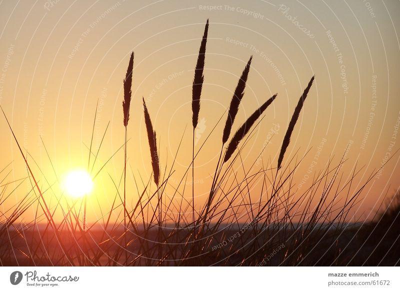 Ein Abend am Meer Sonne Strand ruhig Gras
