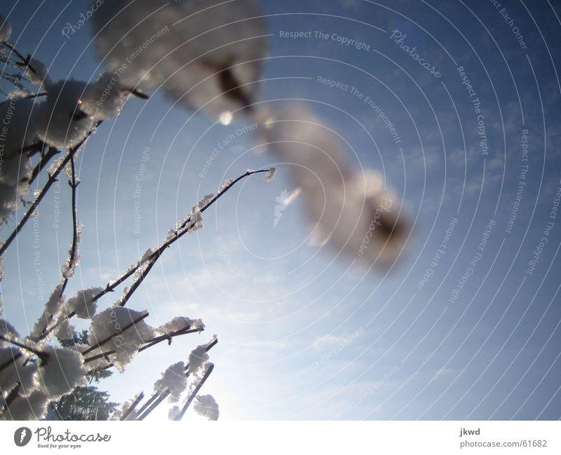 Eis am Stiel Himmel weiß blau Sonne Winter Wolken Ferne schwarz Schnee Frühling glänzend Sträucher Klarheit Ast Jahreszeiten