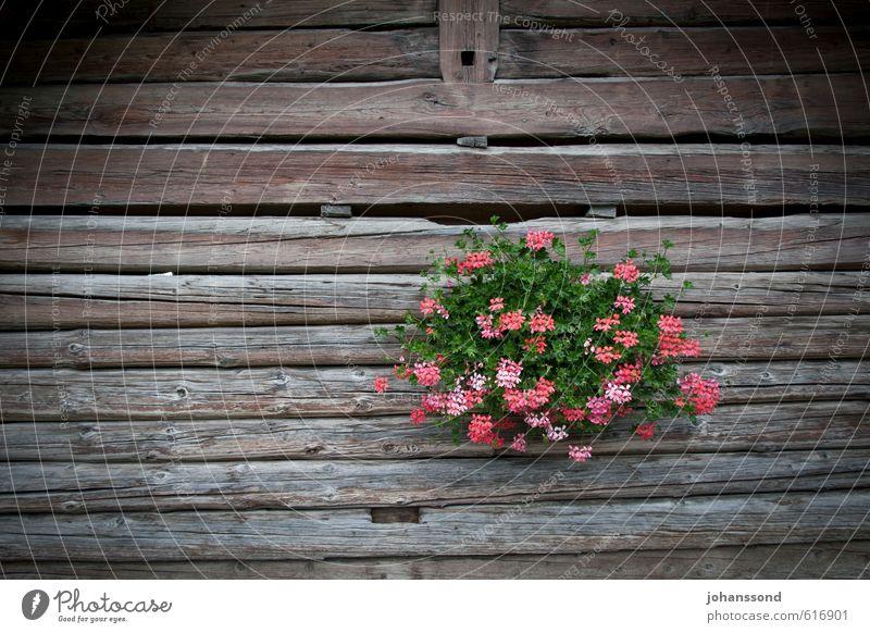 Blumenschmuck Dekoration & Verzierung Pflanze Topfpflanze Hütte Holzhaus Blumenstrauß Erholung genießen alt schön braun Zufriedenheit Lebensfreude ästhetisch