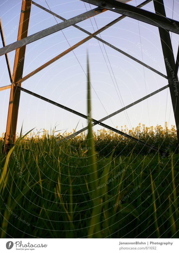 Strommast Himmel blau Sonne Gras Raps Blauer Himmel