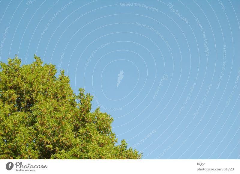 Blätterecke #1 Himmel Baum grün blau Blatt beruhigend