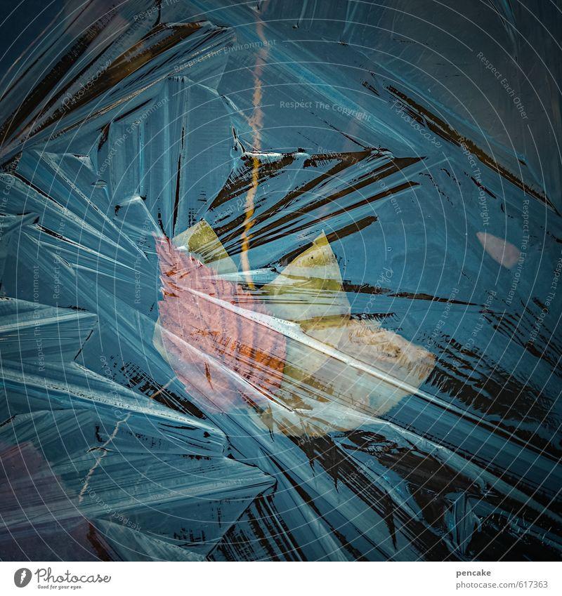 eiszeit Natur Wasser Blatt Winter Eis Design Dekoration & Verzierung Urelemente Frost Zeichen gefroren türkis Teich Kristallstrukturen Eisblumen Eiszeit