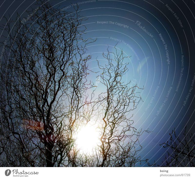 Sonnenuntergang im Gegenlicht - romanesque! Korkenzieher-Weide kahl Wassertropfen Herbst kein laub astwerk Tau