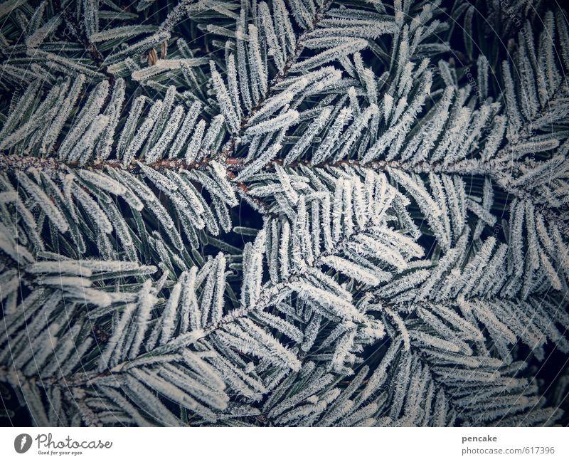nadelkissen Natur Winter Wetter Eis Frost Pflanze Blatt Zeichen ästhetisch kalt blau grün weiß trösten Schmerz bizarr Design Tannenzweig Tannennadel Nadelkissen