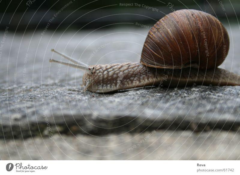 Langsam durch's Leben... Haus Tier grau braun klein rund Bodenbelag Schnecke langsam Weinberg