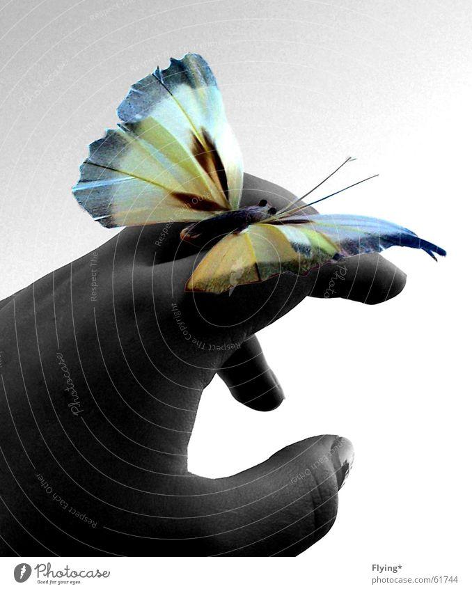 Flieg! Himmel Hand weiß Sommer Tier schwarz Glück fliegen frei Flügel Insekt Schmetterling Daumen Finger