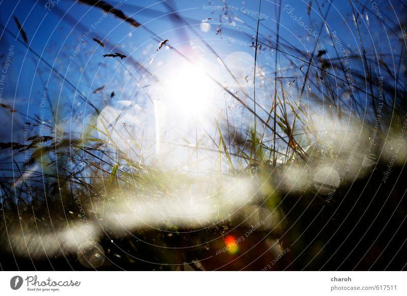 Froschperspektive Umwelt Natur Landschaft Pflanze Erde Luft Wasser Wassertropfen Himmel Wolkenloser Himmel Sonne Sonnenlicht Herbst Klima Wetter Schönes Wetter