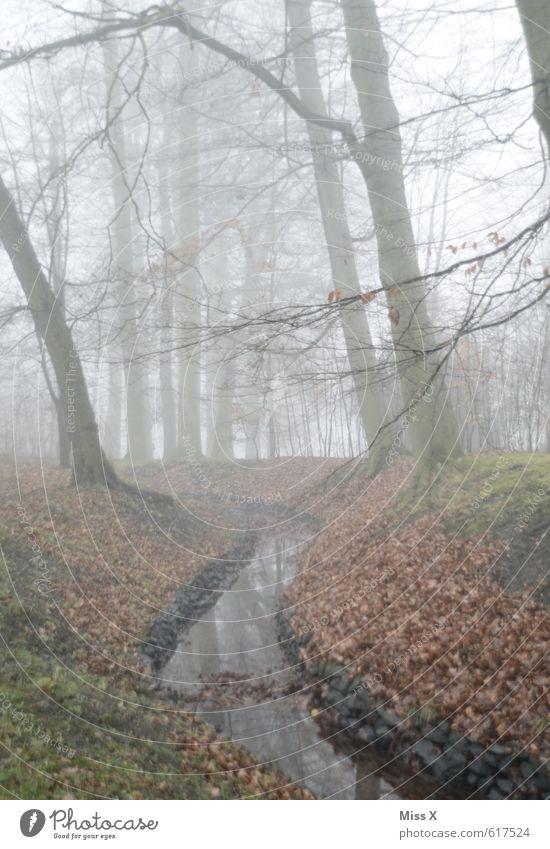 DE-English: It´s BÄÄÄH outside Wasser Herbst Winter Wetter schlechtes Wetter Nebel Baum Park Wald See kalt trist grau Gefühle Stimmung Traurigkeit Trauer