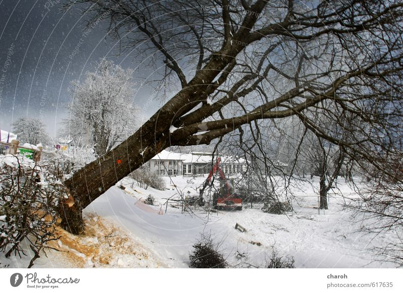 Baum fällt Himmel Natur blau weiß Landschaft Winter schwarz kalt Umwelt Schnee grau Schneefall Eis Park Frost