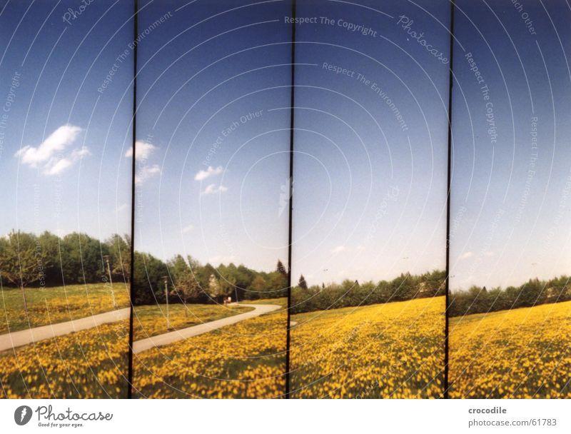 blümchenwiese Löwenzahn Sommer Frühling Wolken gelb Baum grün Lomografie supersampler Wege & Pfade starße Blühend Schönes Wetter Himmel blau