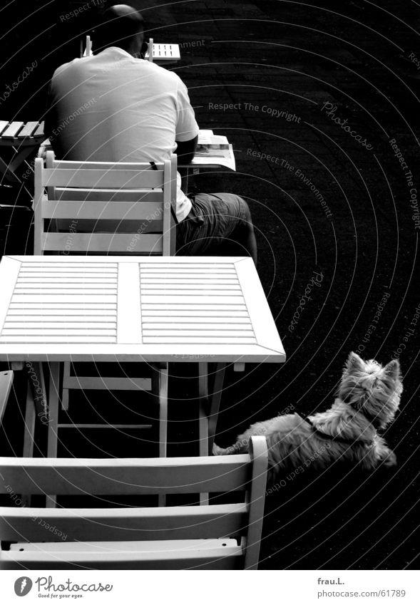 Straßencafe Mann lesen Zeitung Hund Café hart Tisch Straßencafé Morgen Gastronomie Säugetier Stuhl Rücken Kontrast