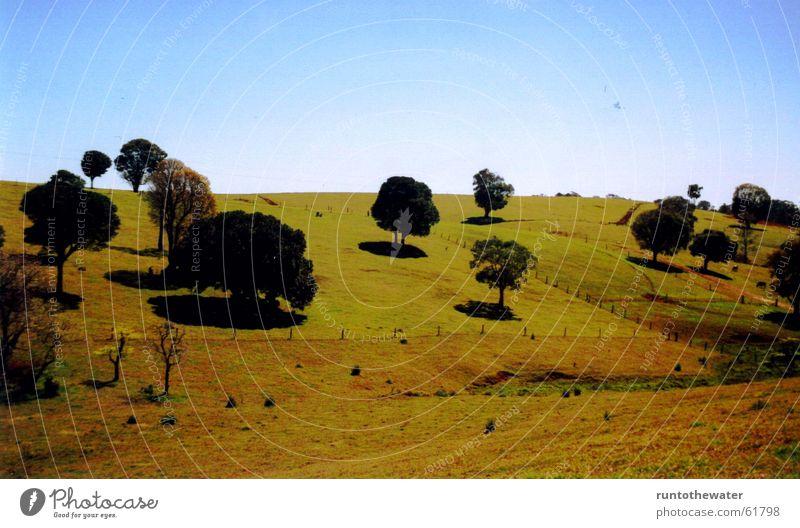 Unterwegs Baum Feld Australien Wiese Sehnsucht Aussicht stoppen Himmel Freiheit Natur Landschaft einzigartig Momentaufnahme