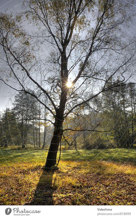 Baum im Gegenlicht Natur Landschaft Sonne Sonnenlicht Herbst Wald Farbfoto Außenaufnahme Textfreiraum unten Tag Licht Kontrast Silhouette Lichterscheinung