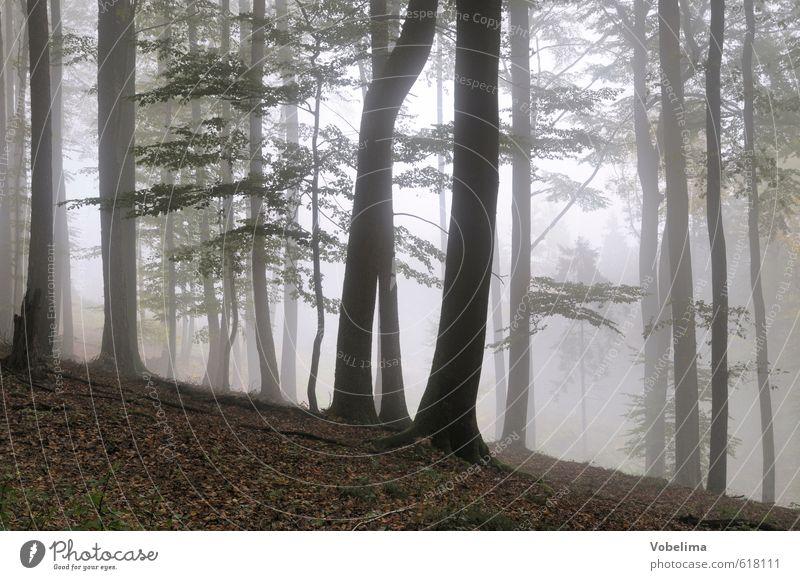 Nebel im Wald Natur Landschaft Luft Herbst Wetter Baum Traurigkeit braun schwarz weiß Trauer unheimlich mystisch Baumstamm Farbfoto Außenaufnahme Menschenleer
