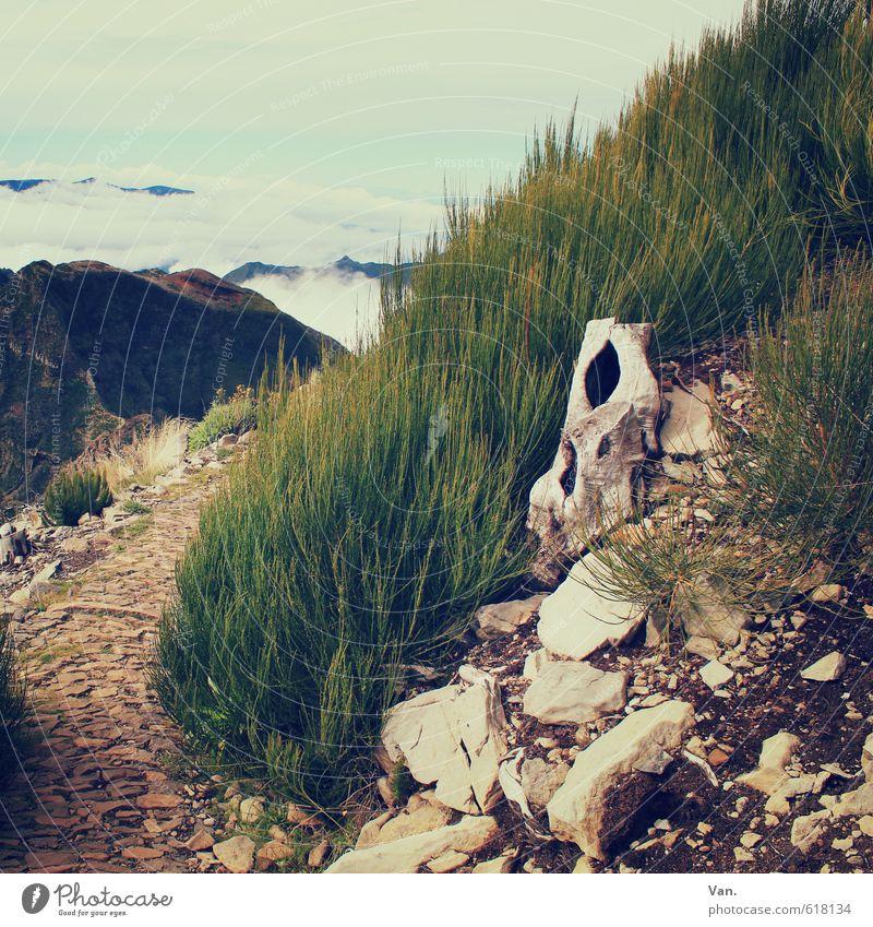 Wandertag wandern Natur Landschaft Pflanze Erde Himmel Wolken Schönes Wetter Gras Sträucher Schachtelhalm Baumstumpf Felsen Berge u. Gebirge Madeira