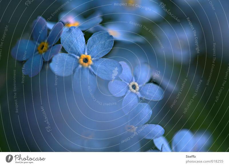 blue romantic Natur Pflanze blau schön Farbe Blume Blüte Gefühle Frühling Textfreiraum Geburtstag Blühend Romantik Postkarte Blütenblatt Valentinstag
