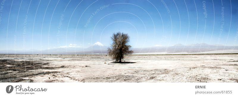 lost tree Himmel Baum blau Ferien & Urlaub & Reisen Berge u. Gebirge Sand groß Wüste heiß trocken Panorama (Bildformat) Vulkan Chile Salar de Atacama